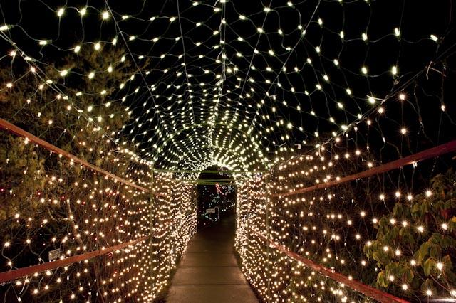 Christmas Lights 11